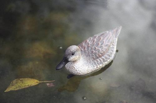 Pond figures Teal female